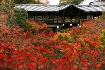 東福寺の知られざる魅力を紹介!紅葉以外の楽しみ方
