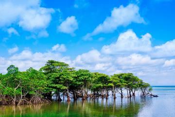 西表島と由布島の楽しみ方!手つかずの自然を満喫できるアクティビティ