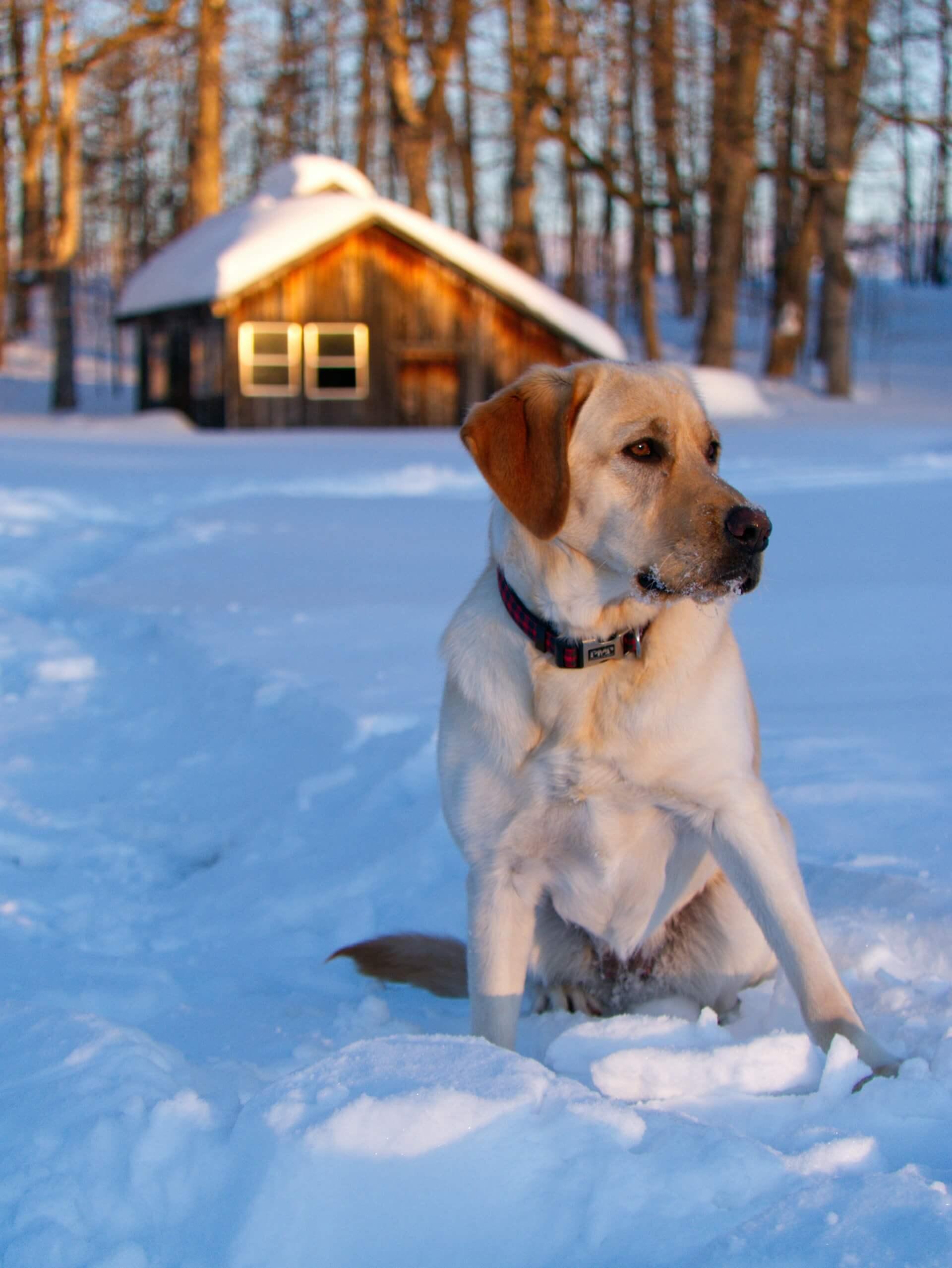 Pet Friendly Wears Valley, TN Cabins