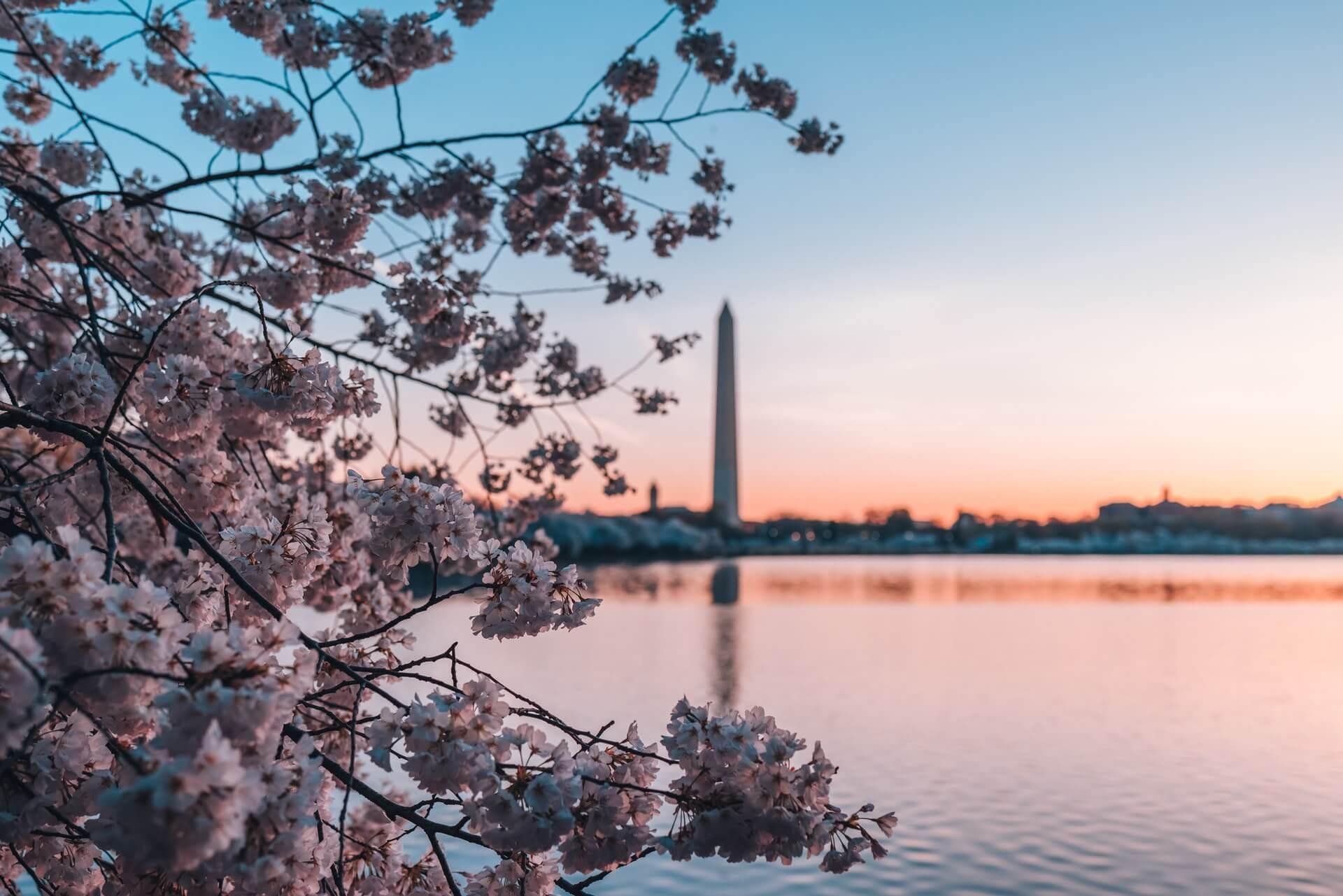 Cabins in Washington DC