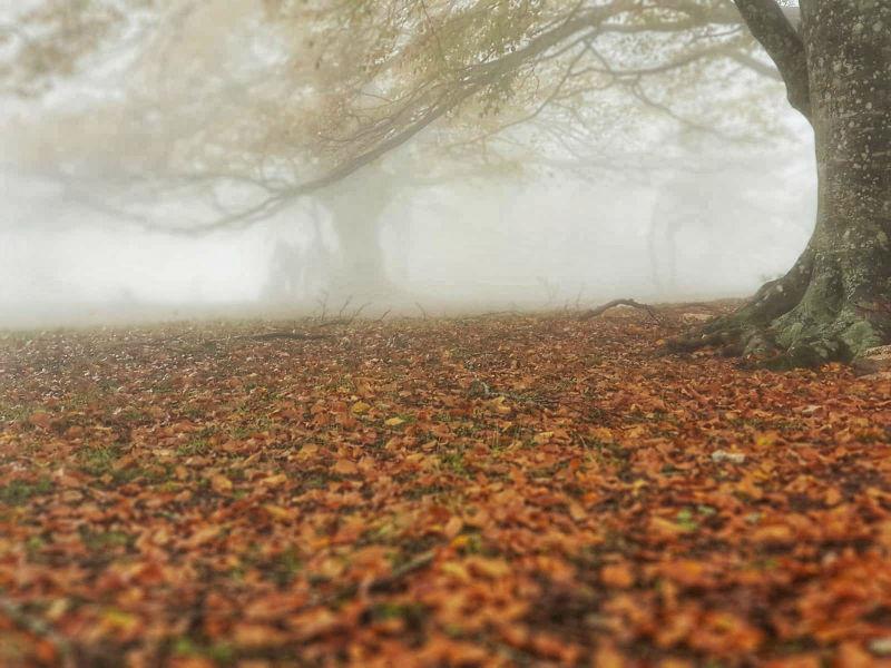 Faggeta Canfaito   Primo piano sul tappeto di foglie rosse
