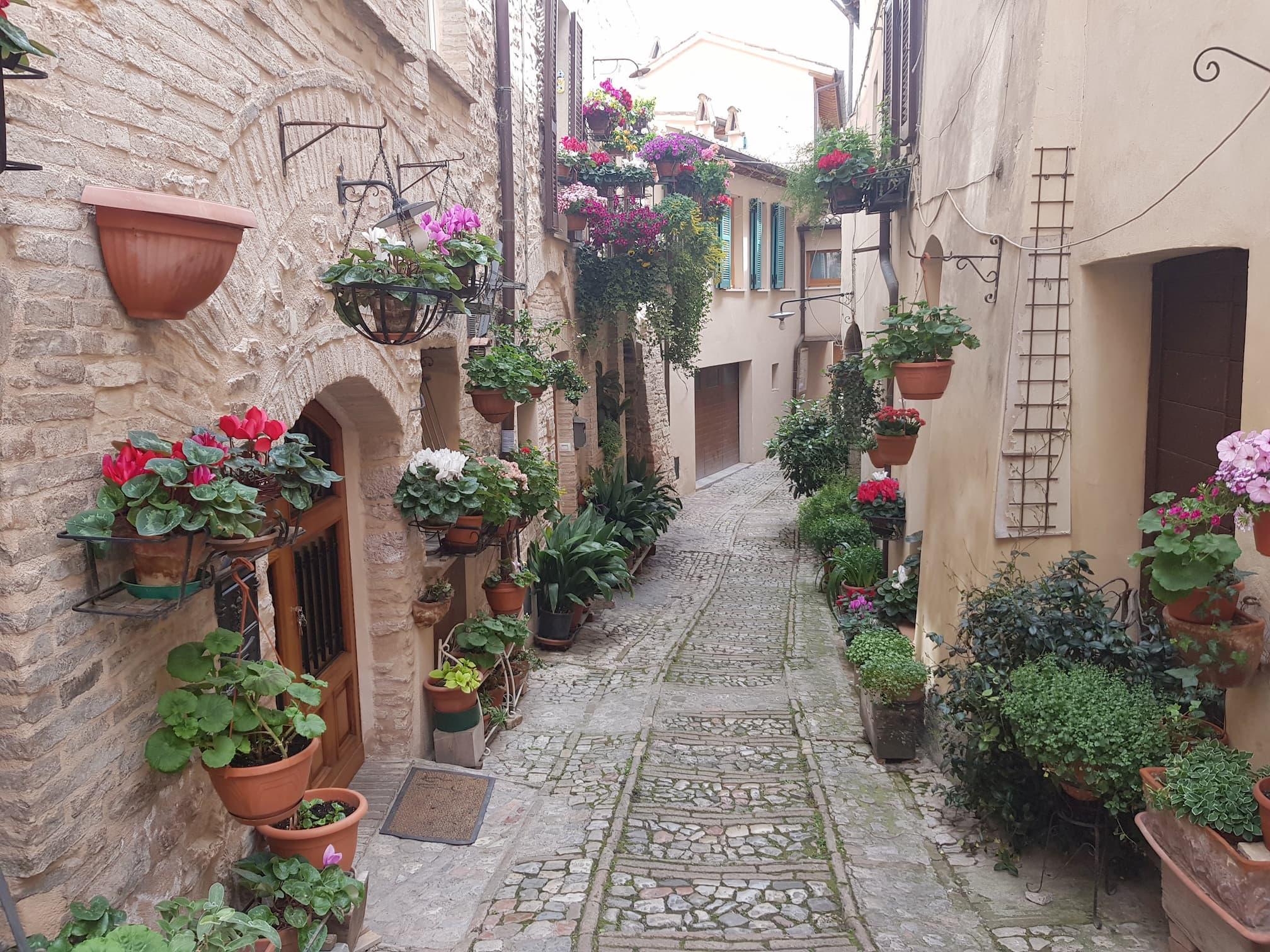 Spello, città dei fiori e dell'arte