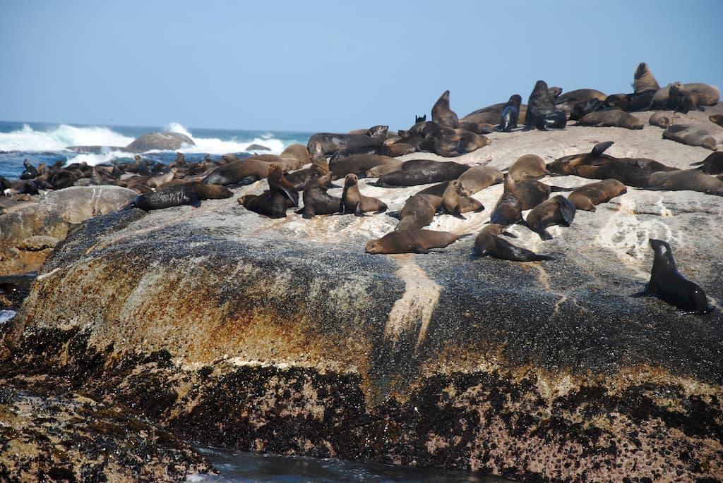 Seal Island a Città del Capo