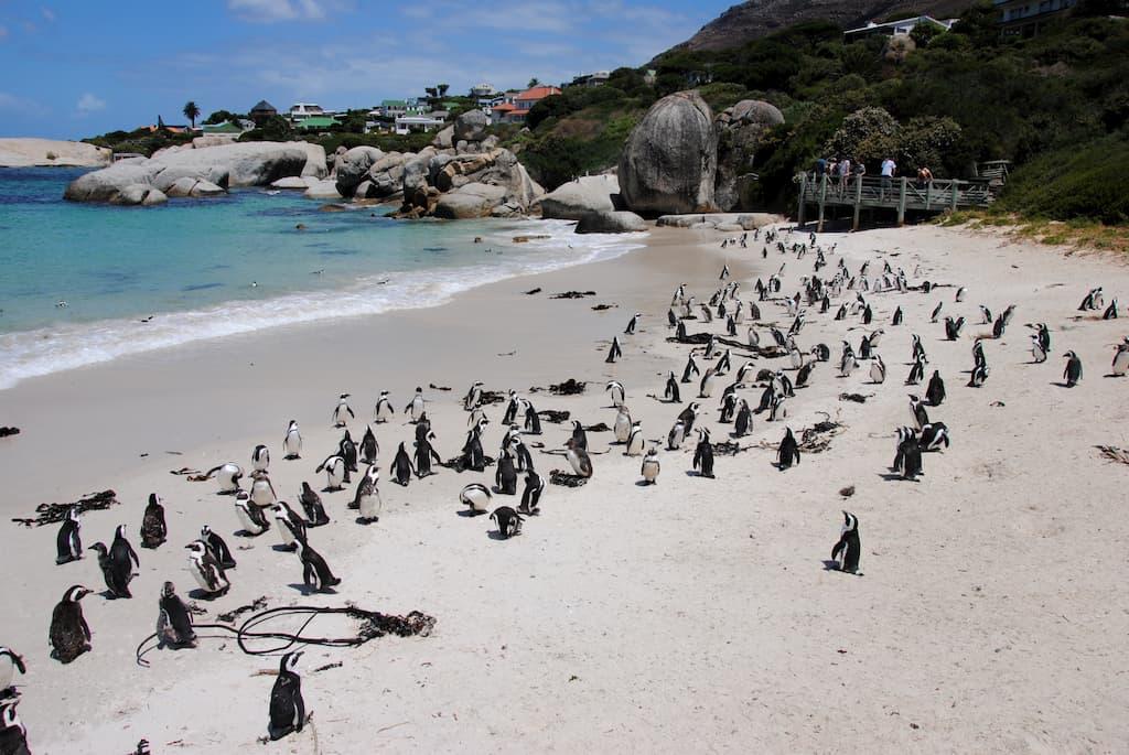 Boulders Beach a Città del Capo
