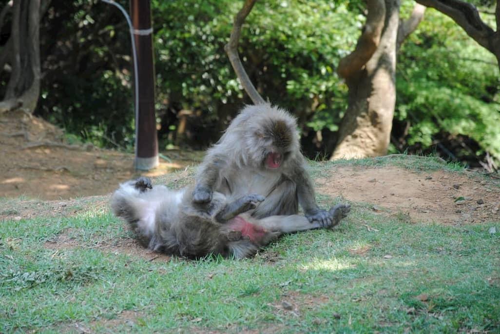 Parco delle scimmie di Arashiyama