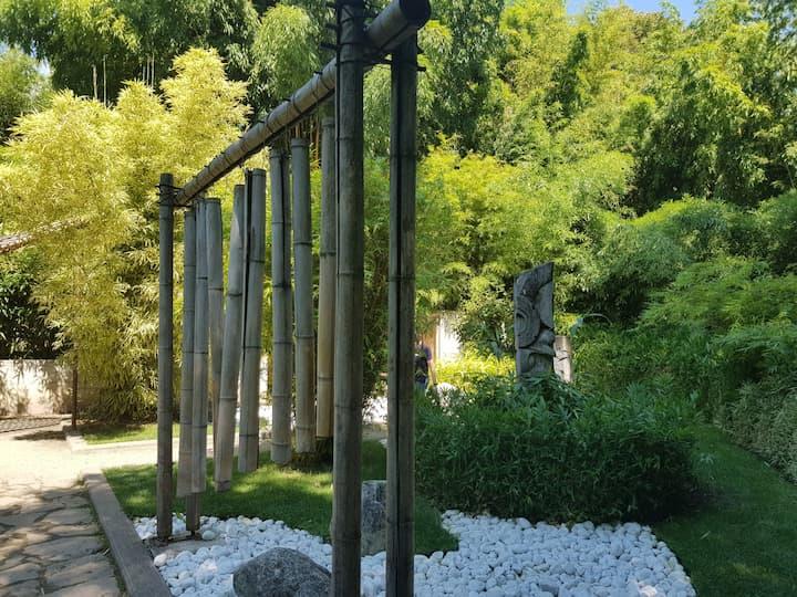 Foresta di Bambù ne I Boschi del Mondo