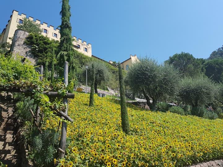 I girasoli dei Giardini di Sissi a Merano