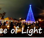 Tree of Light - Tribute to lost loved ones : Jameson Park