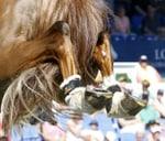 Hartland Agri Show Jumping : Pienaardam Equestrian Centre
