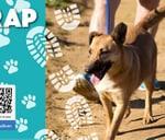 AWSS BRAK TRAP : Animal Welfare Society Stellenbosch