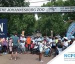 Nappy Run Fun Run : The Johannesburg Zoo