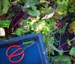 Food Growing Workshop Phase II : Boschendal