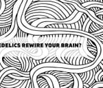 Can Psychedelics Rewire Your Brain? : The Raptor Room