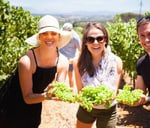 Delheim Harvest Festival 2019 : Delheim Wines
