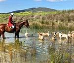 Cape Winelands Hunt, R45 Simondium : Cape Winelands Riding