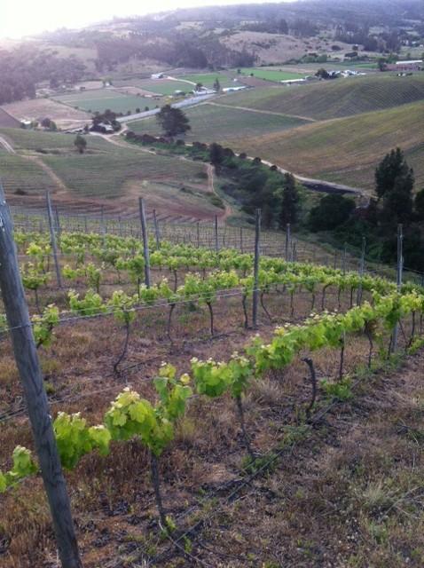 Casa Marin vingård