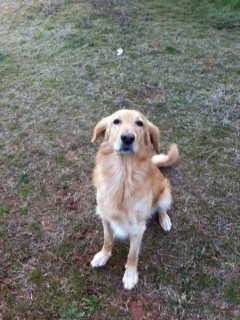 Frisk hund