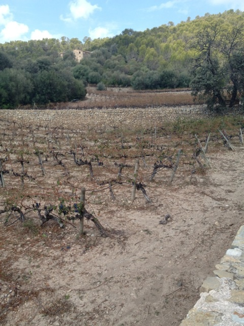 Hagel Mallorca 12 nr 2