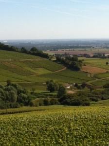 Montagny - vingårdar