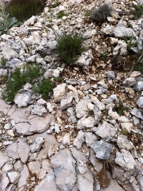 Peljesac sten
