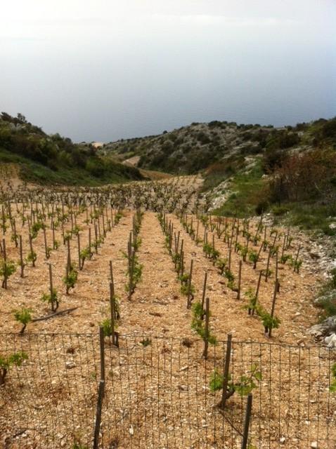 Peljesac vingård