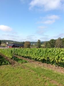 Svebsk vingård2