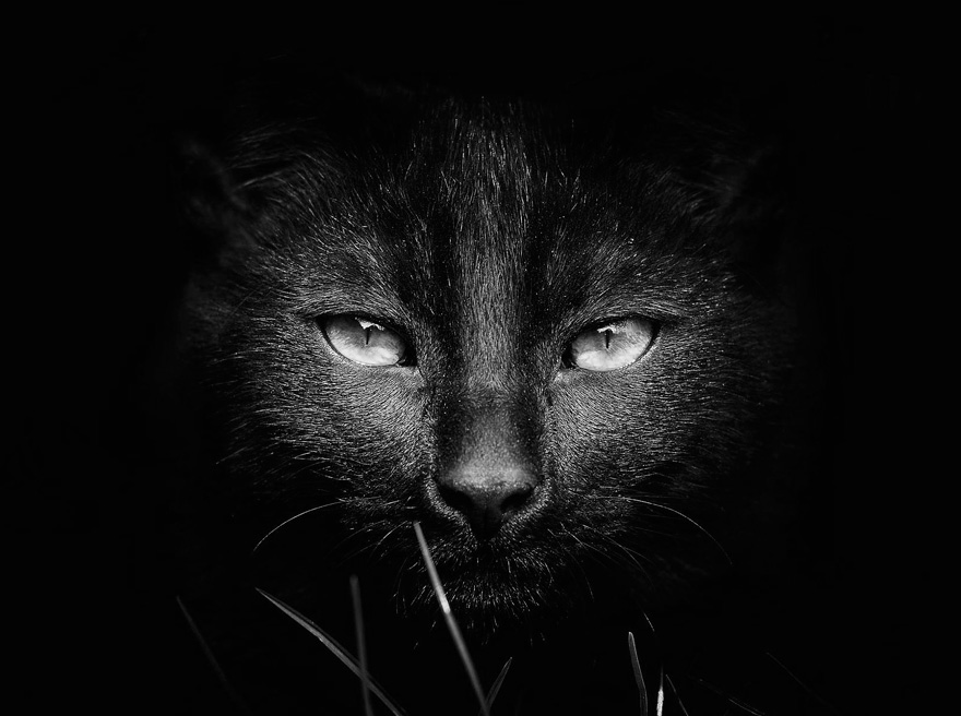 mysterious-cats-black-and-white-portraits-2