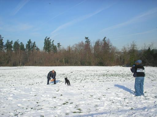 Dog (Sheppard) Cali playing in the snow with family. Cali enjoyed base ball and eating snow.