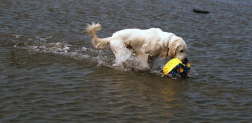 Cilas the dog playing with a ball in the water 3