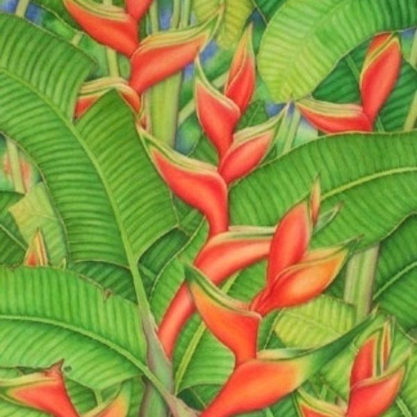 Red-Orange Heleconia