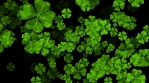 Clovers Particle Flyby