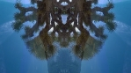 City Mandala - Joshua Tree  - Medicine Wheel