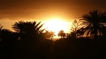 Glowing golden sunset rays palm trees silhouettes Canary Islands Spain