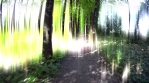 Glowing Path in Forest