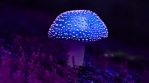 Blue magic mushroom hyper rotating time lapse Amanita muscaria abstract psychede