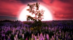 Surreal glowing HDR sunrise, lupin flowers, tree in wind, huge sun