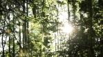 Sliding Forest