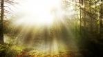Sunny Nature Scenery