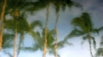 Water Reflection PalmTrees