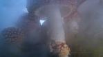 Towering Amanita mushrooms through smoky fog, close up macro