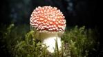 Amanita Muscaria mushroom disco ball light effects, Iceland
