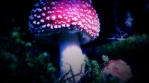 Amanita Muscaria magic mushroom macro super close up abstract hyperlapse 4k