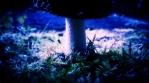 Amanita muscaria mushroom close up spinning hyperlapse seamless loop cool colors