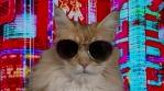 cat kitten meow animal purr cute feline disco