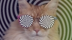 cat kitten meow animal purr cute feline disco