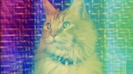 Cat Kitten Meow Animal Purr Cute Feline Disco Hypnotic