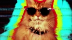 Cat Kitten Meow Animal Purr Cute Feline Disco Hypnotic
