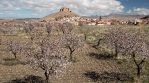 Orchard trees time lapse, Calahorra castle in background, Andalucia Spain