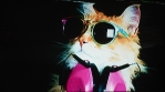 cat_trippy4k71
