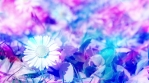 Soft Nature